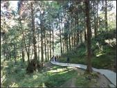 阿里山森林步道:阿里山步道 (14).jpg