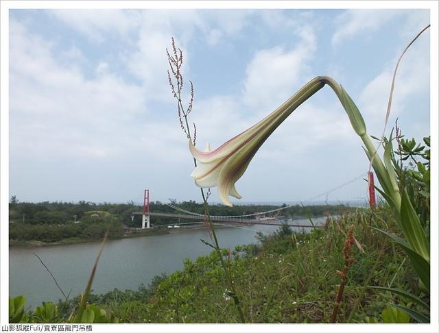 龍門吊橋 (39).JPG - 龍門吊橋百合花