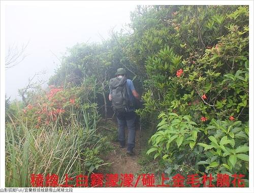 雪山尾稜北段 (5).JPG - 雪山尾稜北段