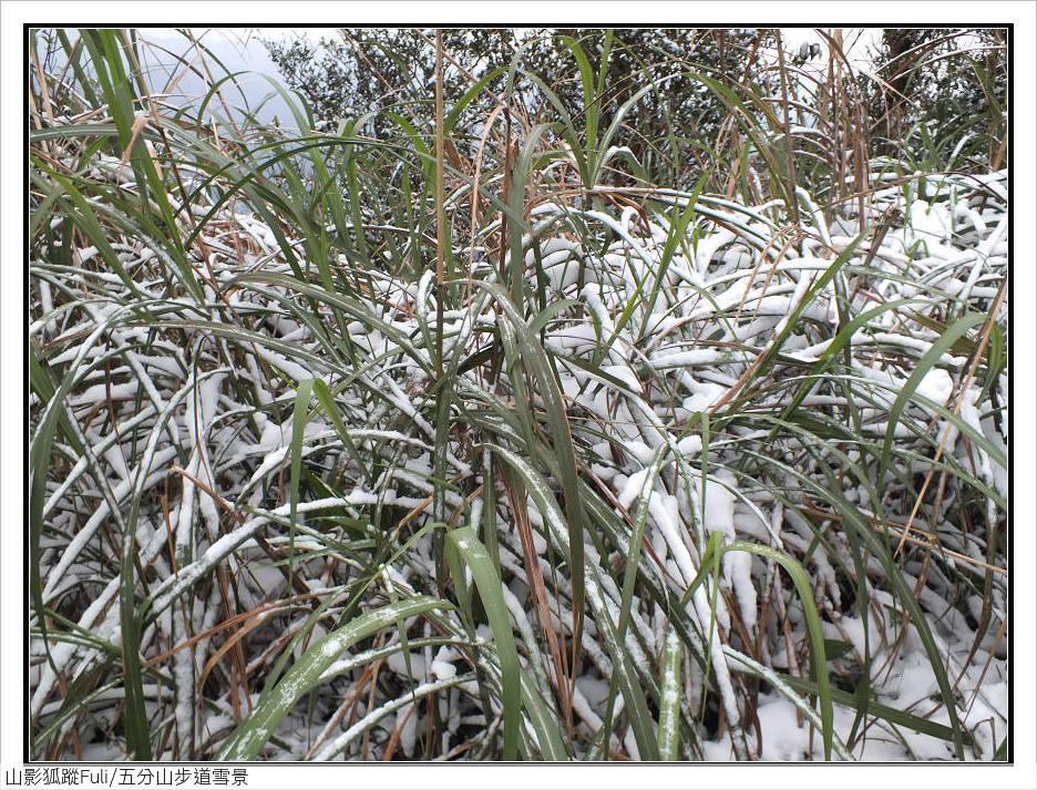 五分山步道雪景:五分山雪景 (39).jpg