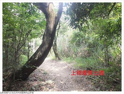 梅花山步道 (5).JPG - 梅花山步道