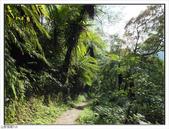 棲蘭森林遊樂區:棲蘭森林遊樂區 (46).jpg