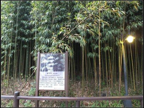 奮起湖的黃昏:奮起湖車站 (6).jpg