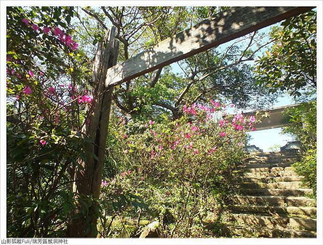 猴洞神社 (33).JPG - 猴洞神社鐘萼木
