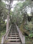 太平山莊、鐵杉林步道、原始森林步道:鐵杉林步道 (9).png