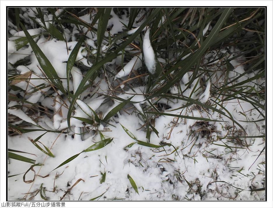五分山步道雪景:五分山雪景 (41).jpg