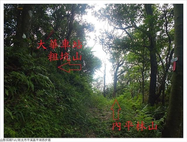 平湖西步道 (50).JPG - 平湖西步道