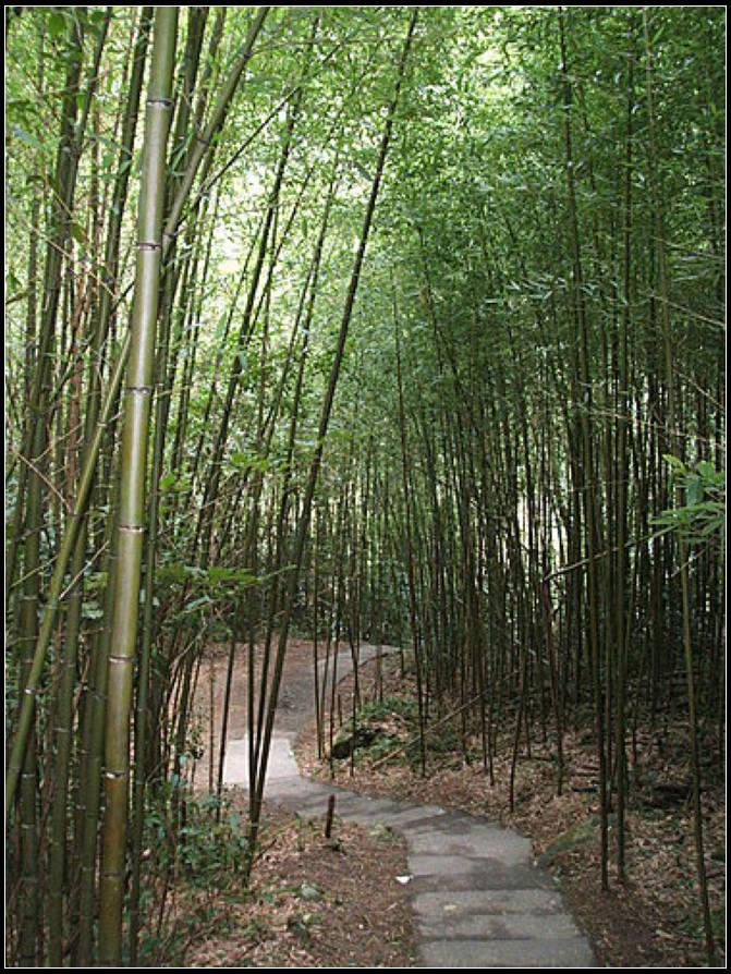 神仙谷:神仙谷 (7).jpg
