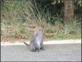 太平山莊、鐵杉林步道、原始森林步道:鐵杉林步道 (1).png