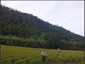 赤柯山金針花:赤柯山 (16).jpg