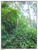 五指山登山步道:五指山登山步道 (8).jpg