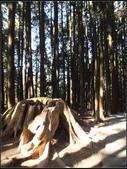 阿里山森林步道:阿里山步道 (15).jpg