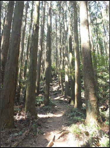 加里山登山步道:加里山 (13).jpg
