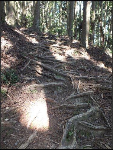 加里山登山步道:加里山 (15).jpg