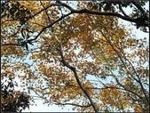 鳥嘴山:鳥嘴山 (8).jpg
