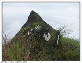 巨齒稜紅星杜鵑花:巨齒稜紅星杜鵑 (56).jpg