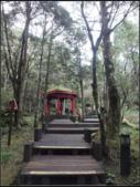 太平山莊、鐵杉林步道、原始森林步道:鐵杉林步道 (8).png