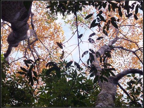 鳥嘴山:鳥嘴山 (7).jpg