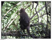 棲蘭森林遊樂區:棲蘭森林遊樂區 (52).jpg