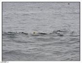 綠島柴口潛水區:綠島柴口潛水區 (6).jpg