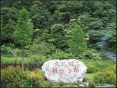 九芎根親水公園 :九芎根 (1).jpg