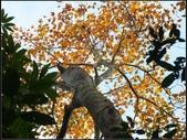 鳥嘴山:鳥嘴山 (6).jpg