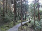 阿里山森林步道:阿里山步道 (7).jpg