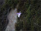 加里山登山步道:加里山 (22).jpg