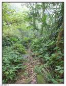 五指山登山步道:五指山登山步道 (54).jpg