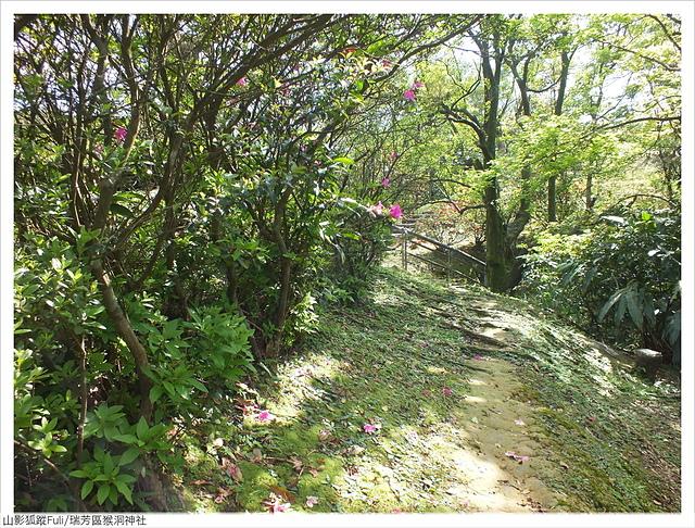 猴洞神社 (15).JPG - 猴洞神社鐘萼木