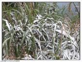五分山步道雪景:五分山雪景 (40).jpg