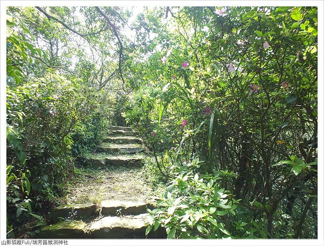 猴洞神社 (6).JPG - 猴洞神社鐘萼木
