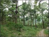 鹿廚坑步道(內環線) :鹿廚坑步道 (2).jpg