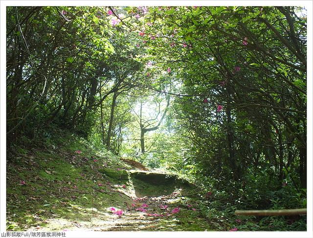 猴洞神社 (10).JPG - 猴洞神社鐘萼木