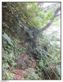 五指山登山步道:五指山登山步道 (55).jpg