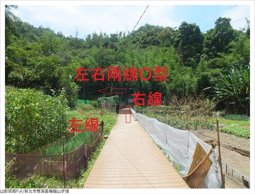 蝙蝠山步道 (3).JPG - 蝙蝠山步道