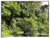 棲蘭森林遊樂區:棲蘭森林遊樂區 (48).jpg