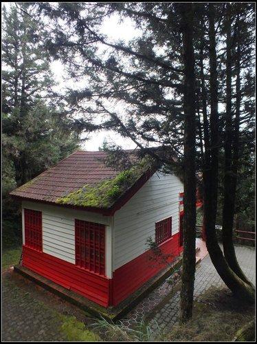 太平山莊、鐵杉林步道、原始森林步道:鐵杉林步道 (7).png