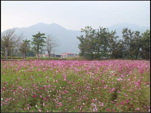 花海、中圳湖 :中圳湖 (6).jpg