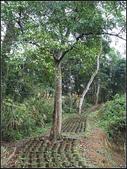 銅鏡山林步道:銅鏡村 (2).jpg