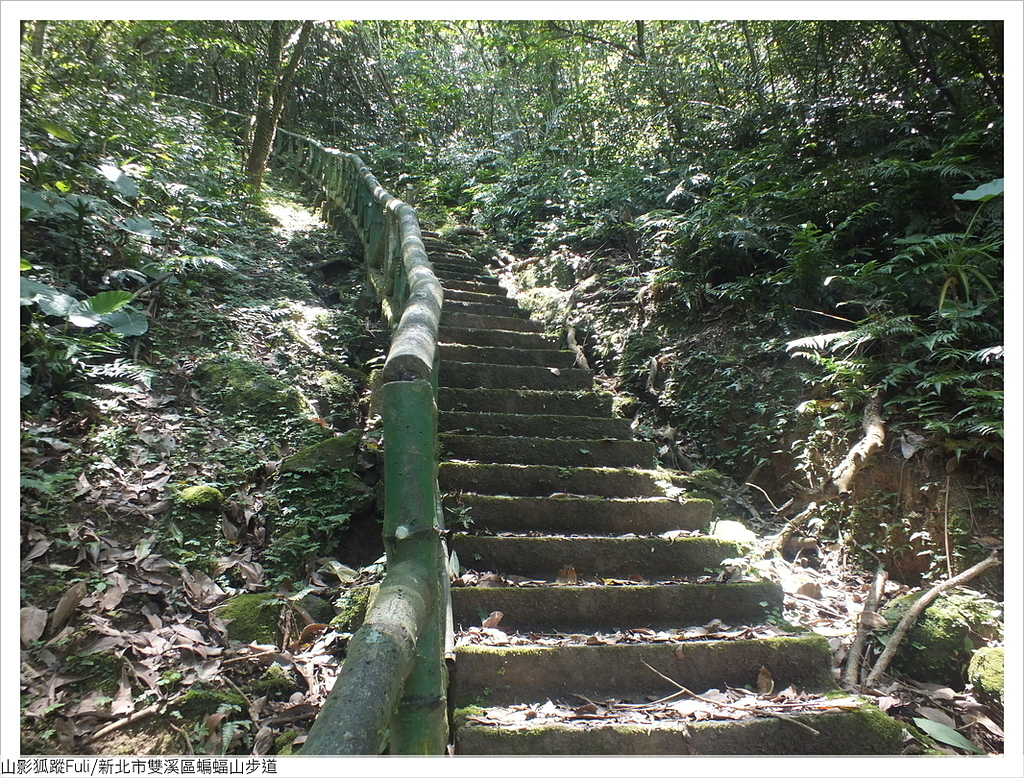 蝙蝠山步道 (10).JPG - 蝙蝠山步道