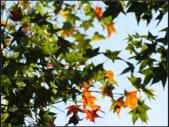 石門楓紅:石門楓紅 (8).png