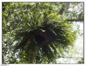 棲蘭森林遊樂區:棲蘭森林遊樂區 (44).jpg