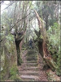 太平山莊、鐵杉林步道、原始森林步道:鐵杉林步道 (3).jpg