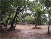 羊稠坑森林步道:羊稠坑步道 (5).jpg