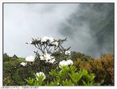 巨齒稜紅星杜鵑花:巨齒稜紅星杜鵑 (87).jpg
