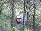 阿里山森林步道:阿里山步道 (6).jpg