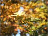 石門楓紅:石門楓紅 (4).png