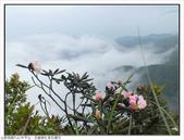 巨齒稜紅星杜鵑花:巨齒稜紅星杜鵑 (89).jpg