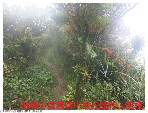 雪山尾稜北段 (24).JPG - 雪山尾稜北段